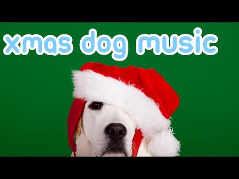 Christmas Music to Relax Your Dog!