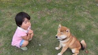 柴犬タロウと家族の日記。 ミイちゃんにしつけ?られます。タロウも困惑。