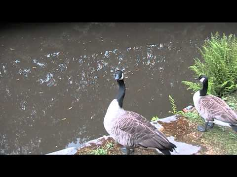Tameside's wildlife on the canal