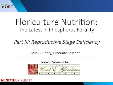 Phosphorus Fertility Part 3: Reproductive Stage P Deficiency