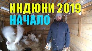 ИНДЮКИ 2019 / ПОДГОТОВКА И ПЛАНЫ / ЖИВЕМ НА ХУТОРЕ