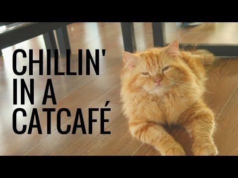 Chillin' in a Cat Cafe | Cebu Philippines | Travel Vlog | GoGrowGlowbern
