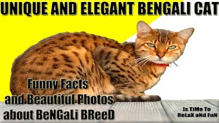 Unique and Elegante Bengal Cat  Funny facts and Beautiful pictures