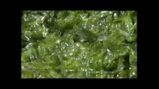 Морские водоросли и Зелёные технологии компании Olmix - RU