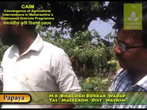 Effect of Magic gro Super and magic gro Dripsol on Papaya Plantation