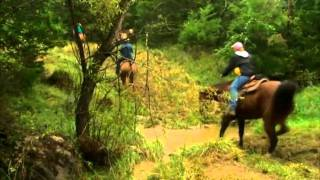 2010 aqha trail ride rainer ranch missouri
