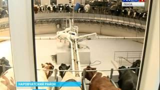 Пенза и Сингапур намерены развивать молочное животноводство(, 2014-05-26T13:34:10.000Z)