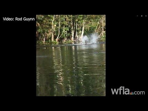 Kayaker Dodges Tree Jumping Monkeys On River In Florida River