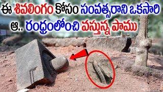 ఆ కైలాసుడే స్వయంగా పంపిన పాము..సంవత్సరానికి ఒకసారి శివలింగం కోసం వస్తుంది|HIndhu temple Facts