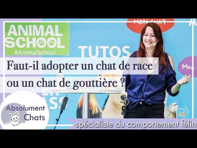 Faut-il adopter un chat de race ou un chat de gouttière ?