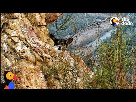 Can You Spot The Hiding Corgi In These Photos? | The Dodo