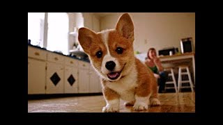 Funny and Cute Dogs compilation 2018 || FUNNY ANIMALS