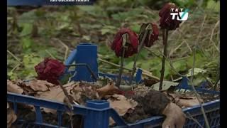 В парке Александрино появились свежие могилы домашних животных