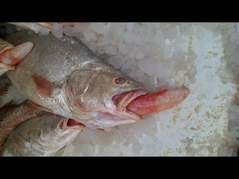 Dammam city Fish market