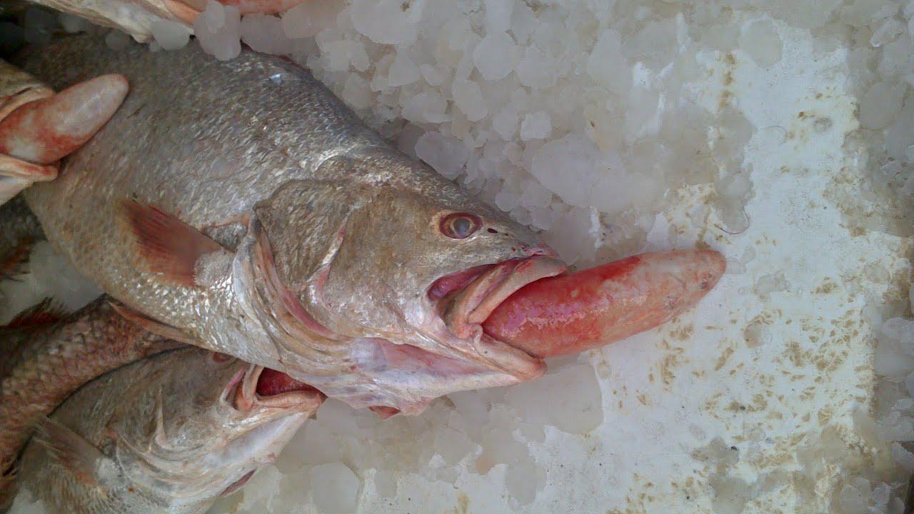 Dammam city fish market youtube for City fish market