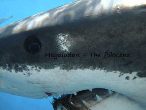 Megalodon - The Pliocene.wmv