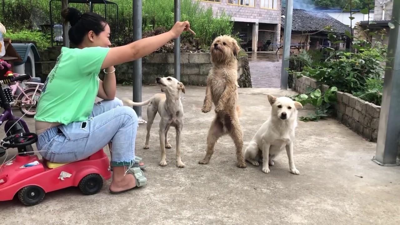 狗狗:為了吃一根火腿腸對著主人使絕招,我容易嗎