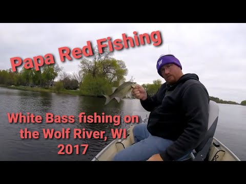 Wolf River White Bass Fishing   Fremont, WI   May 2017