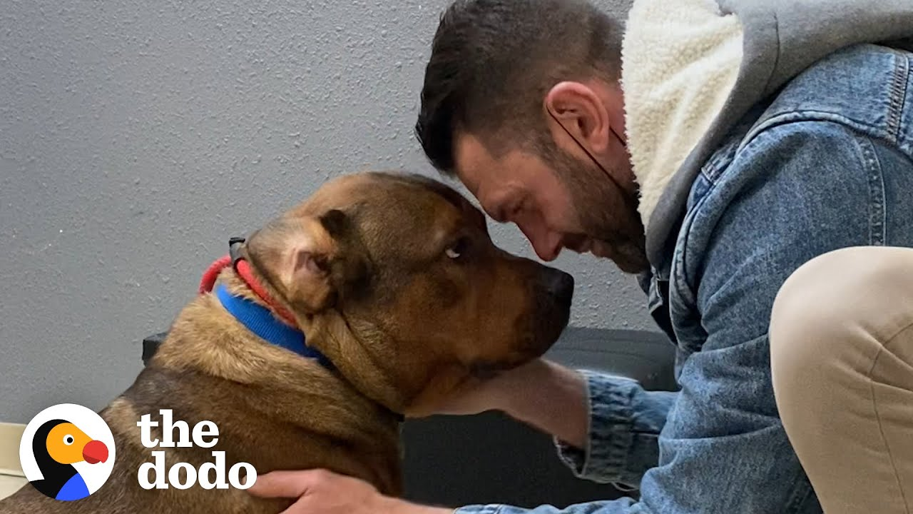 Guy Promises He's Not Going To Keep His Foster Dog... | The Dodo Foster Diaries