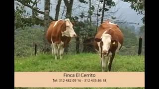 24 de octubre de 2016 Hacienda El Cerrito Raza Montbeliard