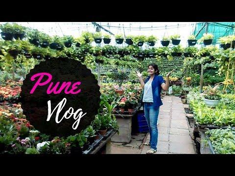 VLOG: Pune Nursery Visit + Succulent plant arrangement  // Garden Up