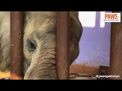 Two Elephants Chained Inside Karachi Zoo