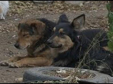 Улан-удэнцы уже сами готовы отстреливать бездомных собак