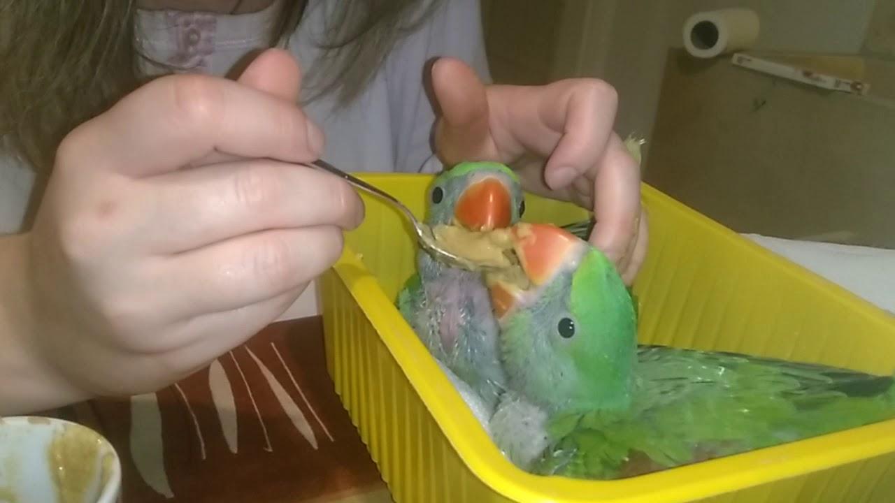 Papagájok - minden mennyiségben - Index Fórum