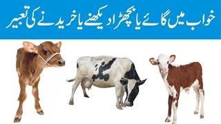 Khwab mein gaye (cow) ya bachra dekhny ki tabeer    सपने में गाय या बछड़ा देखना या खरीदना