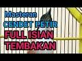 Masteran Cendet Petir Gacor Full Isian Tembakan Mantap  Mp3 - Mp4 Download