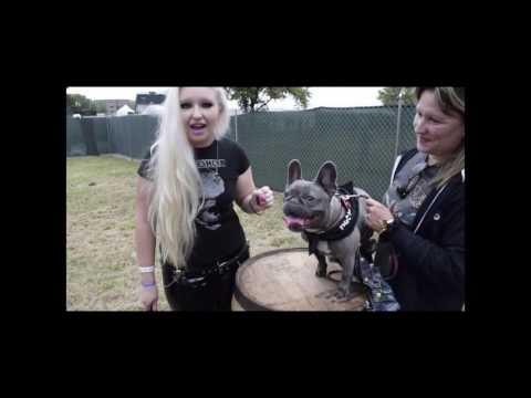 Millie the Metal Dog!