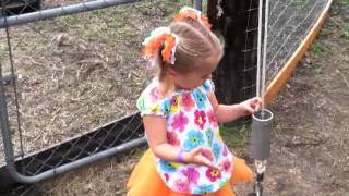 Pumpkin Patch Hayride, Goats, And Corn Maze