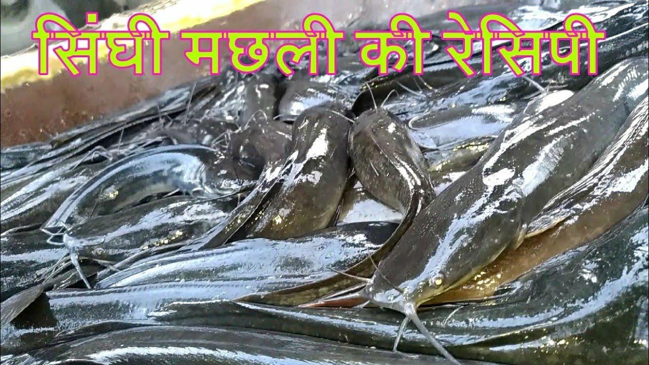 सिंघी मछली की रेसिपी II SINGHI FISH RECEIPE II FULL OF PROTIEN AND VITAMIN  VERY TASTY FISH
