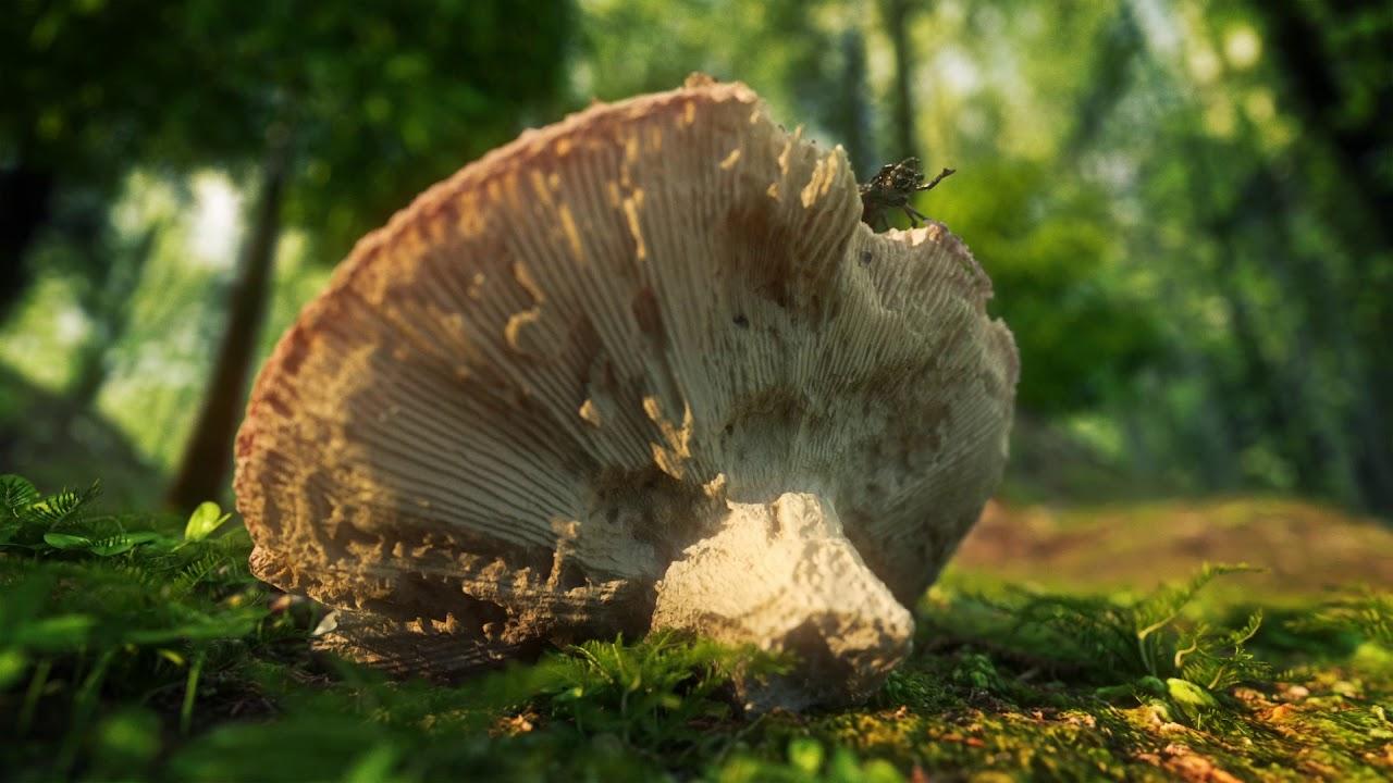 Forest scene - Agisoft + Octane render + C4D
