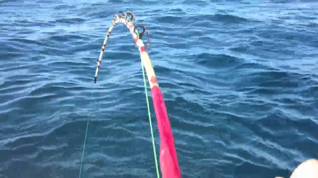10 ft tiger shark destin florida doovi for Destin shark fishing