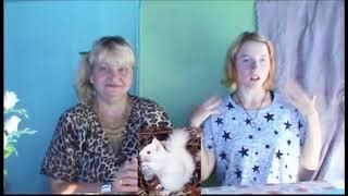 ИР Животные Альбиносы Неудачные