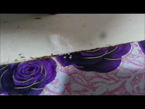 Cara Terbaik Halau Semut Api Di Rumah Selamanya