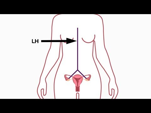 Premenopause #1 - The Hormone Basics