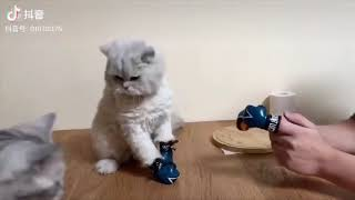 TRY NOT TO LAUGH #620  LITTLE CATS AND DOGS VIDEO COMPILATION