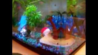 My Fish Aquariums - Update - Mollies, Snails, Shrimp, Platys, Tetras, Ghost Catfish