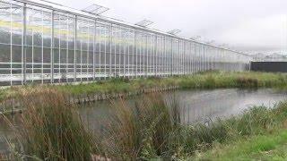Grow: The Netherlands, Westland area, glass greenhouses