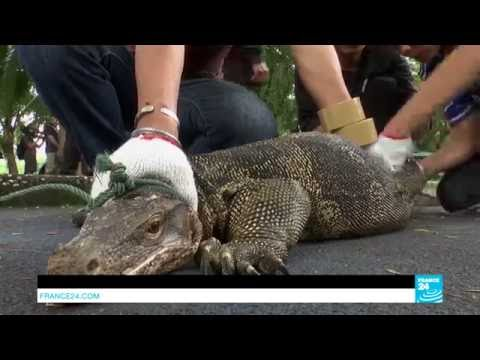 Thailand: Bangkok park overrun... by giant lizards!