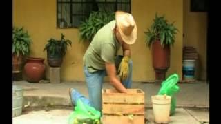 ¿Cómo hacer composta casera? thumbnail