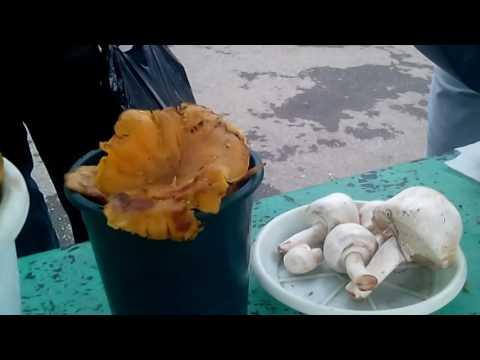 продаю грибы вешенка в краснодарском крае