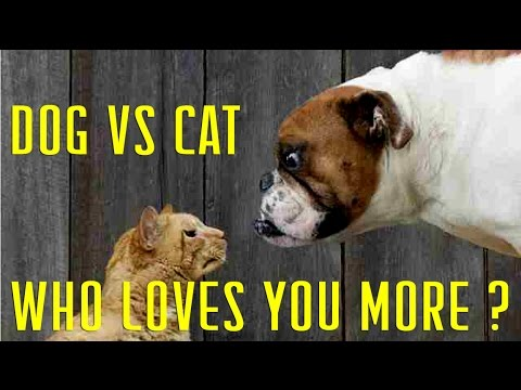 Dog vs Cat Who Loves Humans the most
