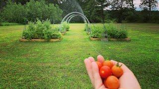 My First Garden: August 2019 Organic Garden Update ~ The Kneady Homesteader