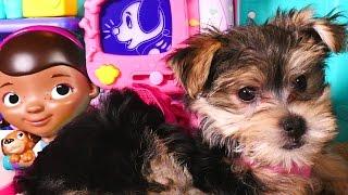 Zumi visits Doc McStuffins HUGE Check-up Center - Disney Toy Veterinarian Station for Pets