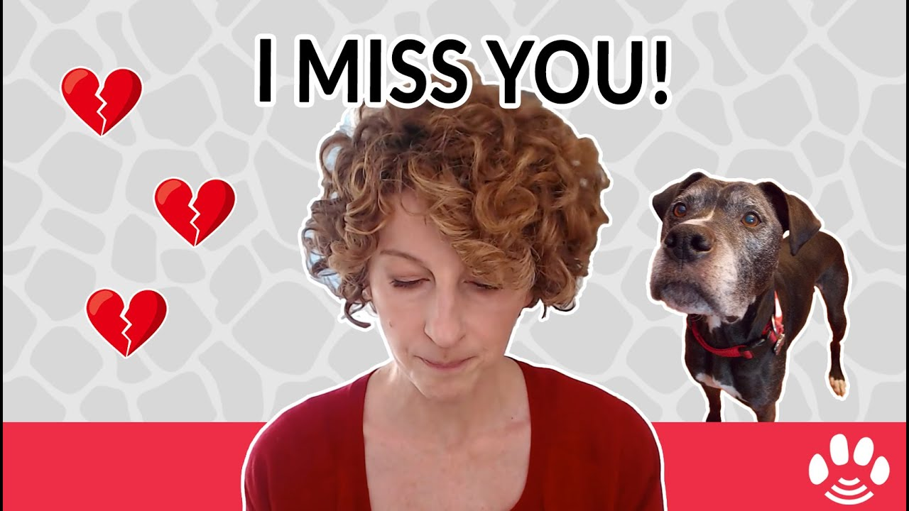 3 Things to do for pet loss and grief | Animal Afterlife & Rainbow Bridge