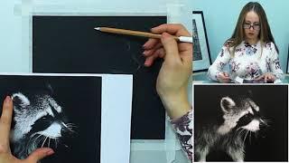 Бесплатный урок по графике: рисуем енота. Урок 2