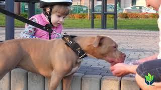 Staffordshire Bull Terrier: Peligros, comportamientos, cuidados...